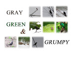 GRAY, GREEN AND GRUMPY