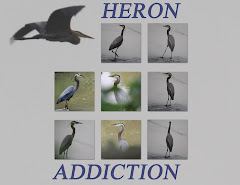 HERON ADDICTION