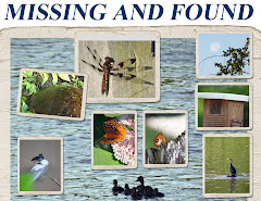 MISSING AND FOUND