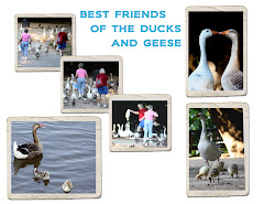 BEST FRIENDS OF THE DUCKS AND GEESE