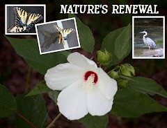 NATURE'S RENEWAL