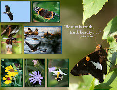 BEAUTY IS TRUTH, TRUTH BEAUTY