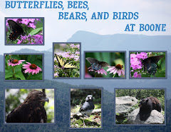 BUTTERFLIES, BEES, BEARS AND BIRDS AT BOONE