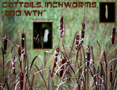 CATTAILS, INCHWORMS, AND WTH?  (what the heck?)