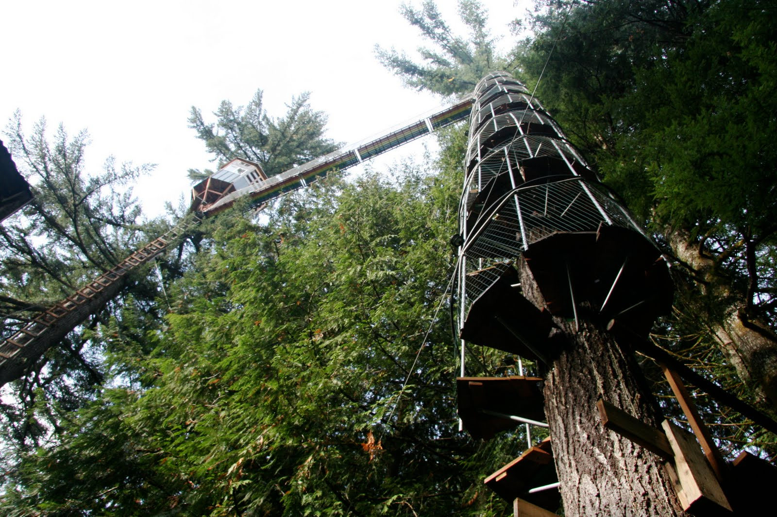 France is hexagonal cedar creek treehouse part ii for Ceader creek