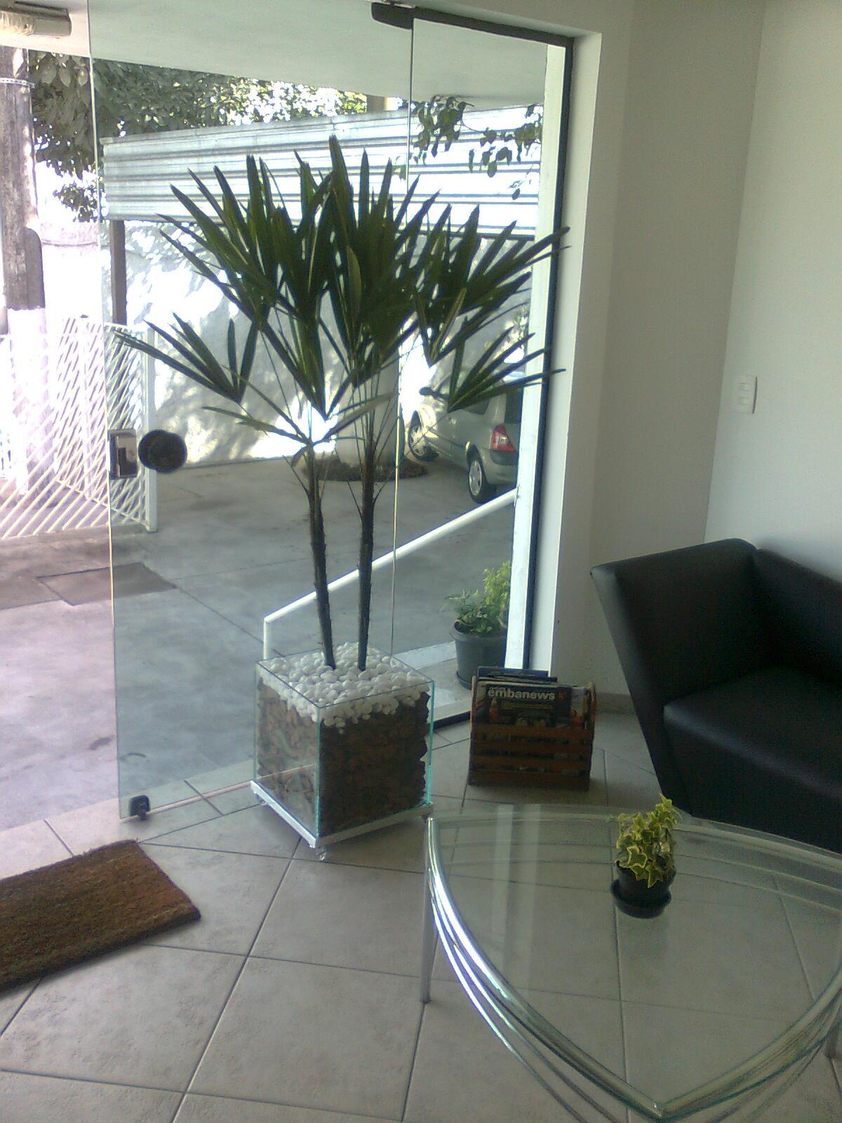 Flores plantas plantas para interiores - Plantas interiores ...