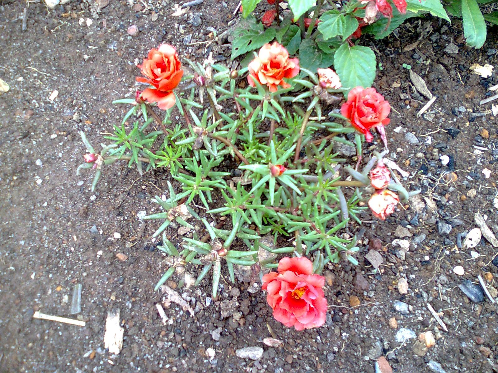 Flores & Plantas Onzehoras