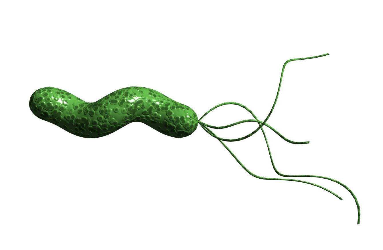 h pylori Abdominal~american academy of pediatrics (aap) describes helicobacter pylori,  or h pylori, a common cause of ulcers.