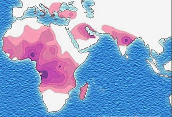 distribution of sickle cell trait