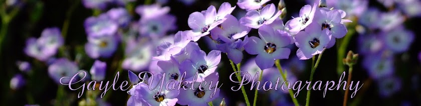 Gayle Yokley Photography