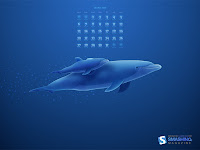 october08-dolphins-calendar-1024x768.jpg