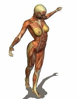 imágenes de anatomía 3D animadas en SomosMedicina medicina