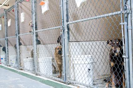 space coast life national pet adoption week dog shelters 425x282