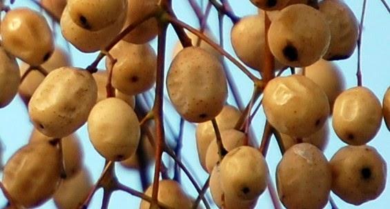 Tri na en la red tras las ra ces de triana rboles del for Arbol con raices y frutos