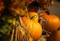 Animated Thanksgiving Pumpkins