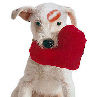 Valentines Day Puppy Postcard