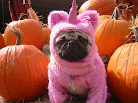 halloween pug costume photo card