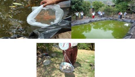 Jre regional santander producci n de mojarra roja el juncal for Proyecto de piscicultura mojarra roja