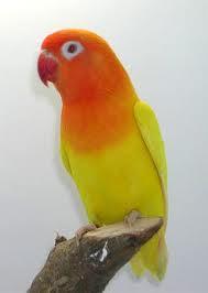 LoveBird's