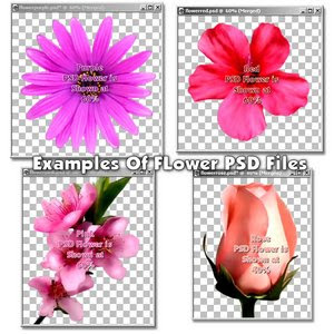Download opened PSD Flowers photoshop PSD free