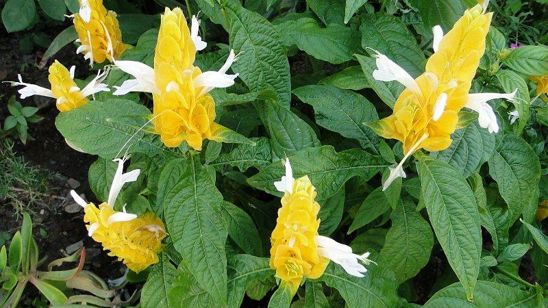 FLORACIONES EN MÁLAGA Y MÁS Floraciones septiembre 2