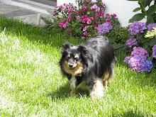 Sam..our Alpha Dog...lol