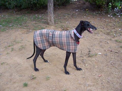 [abrigo+burberrys+vilma.JPG]