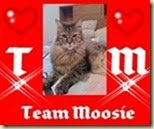 Join Team Moosie