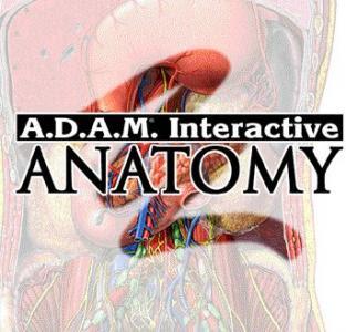 Adams interactive anatomy