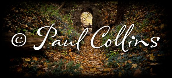 Paul Collins Photography
