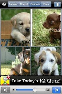 Puppy Pix