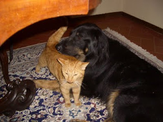 Red cat and Big Dog