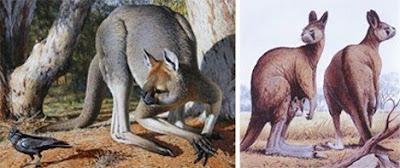 十四種已滅絕怪獸 巨型短面袋鼠