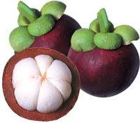 ... buah super tumbuh dan dikenal dengan nama manggis manfaat manggis
