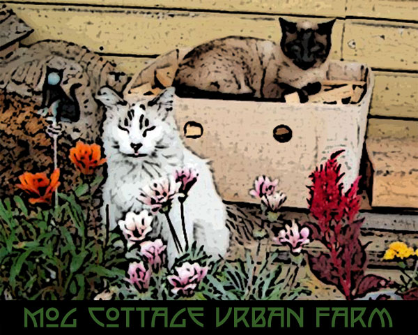 Mog Cottage Urban Farm