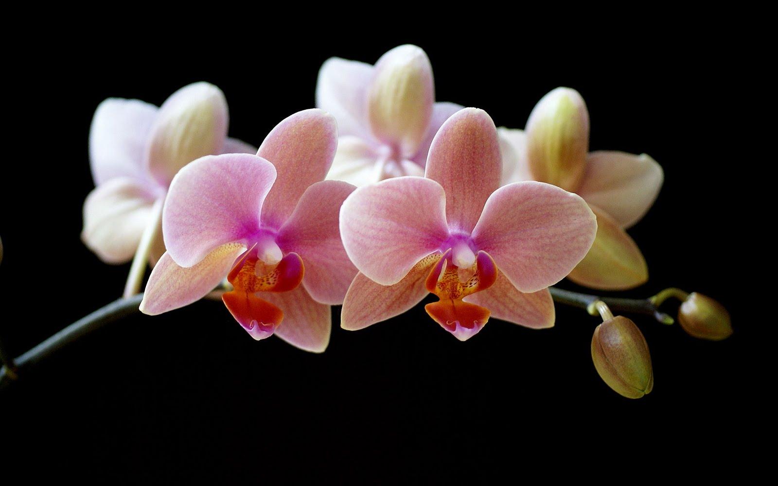 http://4.bp.blogspot.com/_3sU0MnRawMI/TT0mLFc4bCI/AAAAAAAAETo/IluXQ0GGDPI/s1600/wallpaper%2Belegant%2Bflower5.jpg