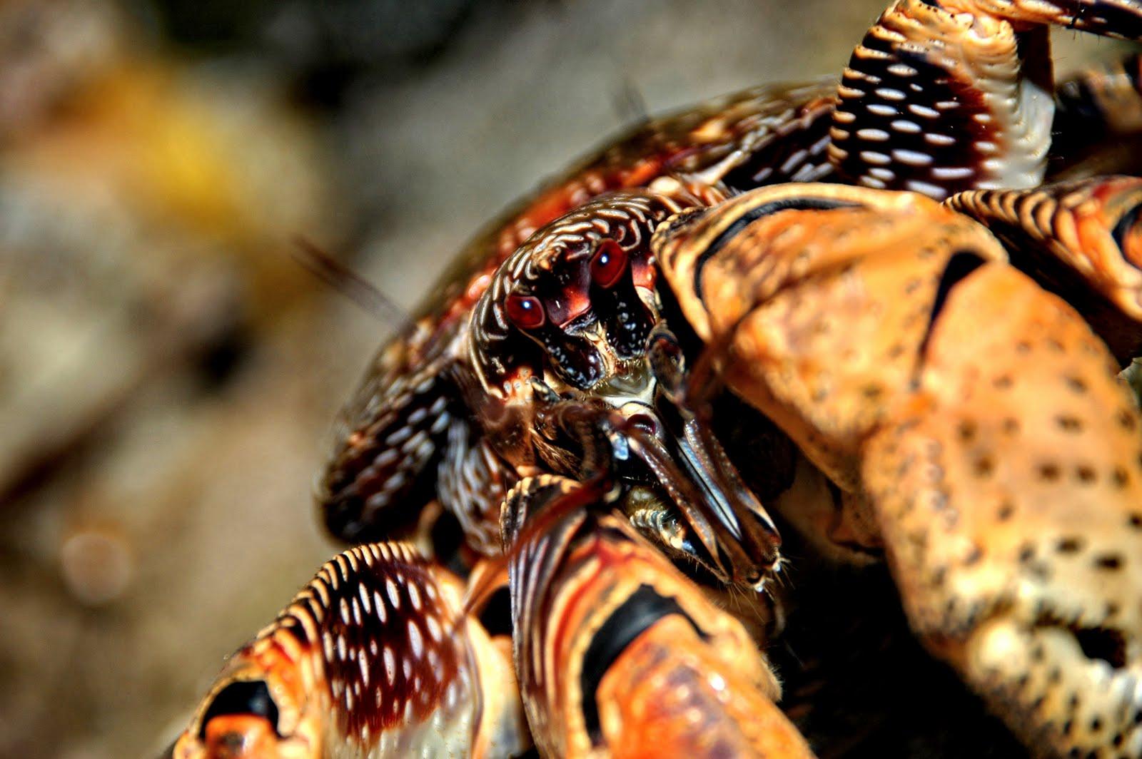 http://4.bp.blogspot.com/_3sU0MnRawMI/TUgX_b2km2I/AAAAAAAAEqY/E-032XWr_X4/s1600/crab%2B.jpg