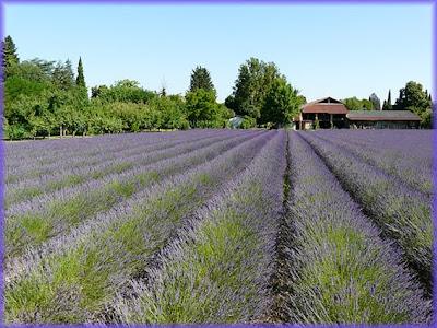 Azienda agricola biodinamica
