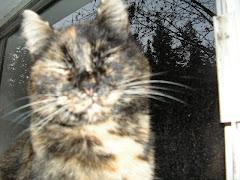 Camie Kitty (Cam Cam)