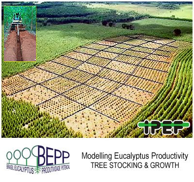 Eucalyptus crops: Tree Stocking and Wood Productivity / Plantaciones de eucalipto: densidad del arbolado y productividad de madera / Jose Luiz Stape (North Carolina State University), Dan Binkley (Colorado State University), Mike Ryan (USDA) et al / BEPP - Brazil Eucalyptus Potential Productivity Project: Influence of water, nutrients and stand uniformity on wood production / BEPP - Proyecto de Modelizacion de la Productividad Potencial del Eucalipto: Influencia de la disponibilidad de agua, nutrientes y la homogeneidad del rodal en la produccion de madera / Gustavo Iglesias Trabado, Roberto Carballeira Tenreiro and Javier Folgueira Lozano / GIT Forestry Consulting SL, Consultoría y Servicios de Ingeniería Agroforestal, Lugo, Galicia, España, Spain / Eucalyptologics, information resources on Eucalyptus cultivation around the world / Eucalyptologics, recursos de informacion sobre el cultivo del eucalipto en el mundo