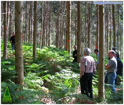 GIT Forestry Consulting, Consultoría y Servicios de Ingeniería Agroforestal, Galicia, España, Spain / Eucalyptologics, information resources on Eucalyptus cultivation around the world / Eucalyptologics, recursos de informacion sobre el cultivo del eucalipto en el mundo
