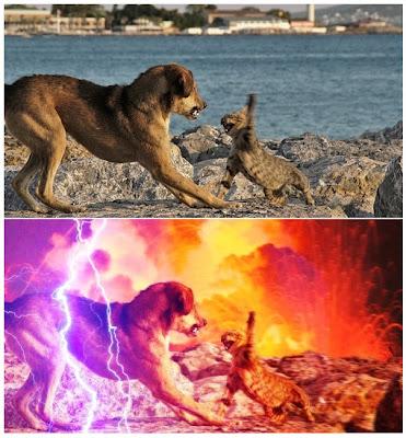 Perro Vs Gato ReLoad