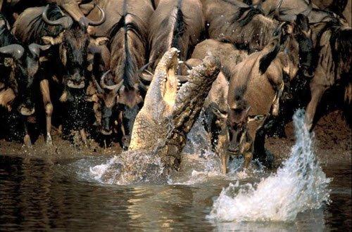 Increibles Fotos Del Mundo Animal