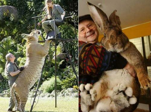 [Animales+gigantes.jpg]