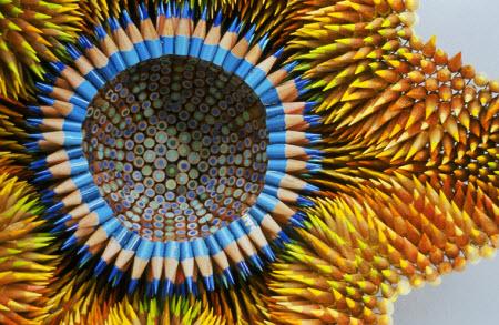 Jennifer Maestre:Arte con lápices