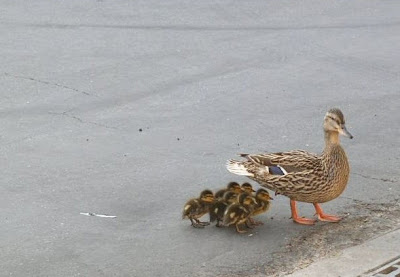 Mala paternidad