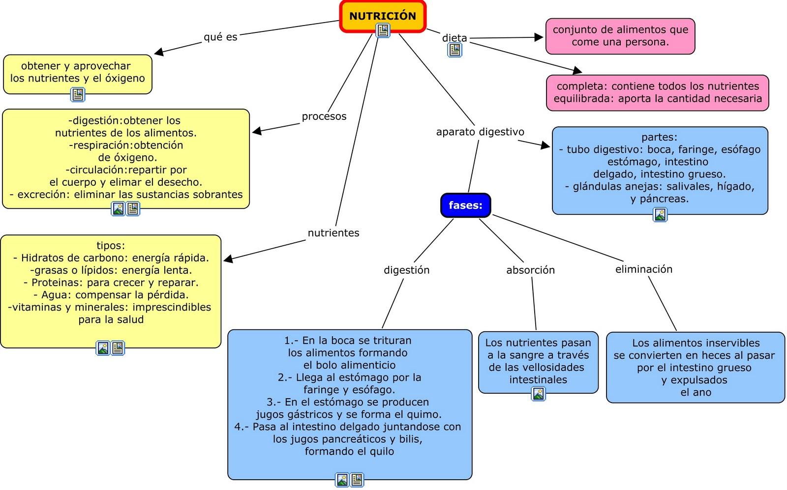 alimentación y nutrición esquema