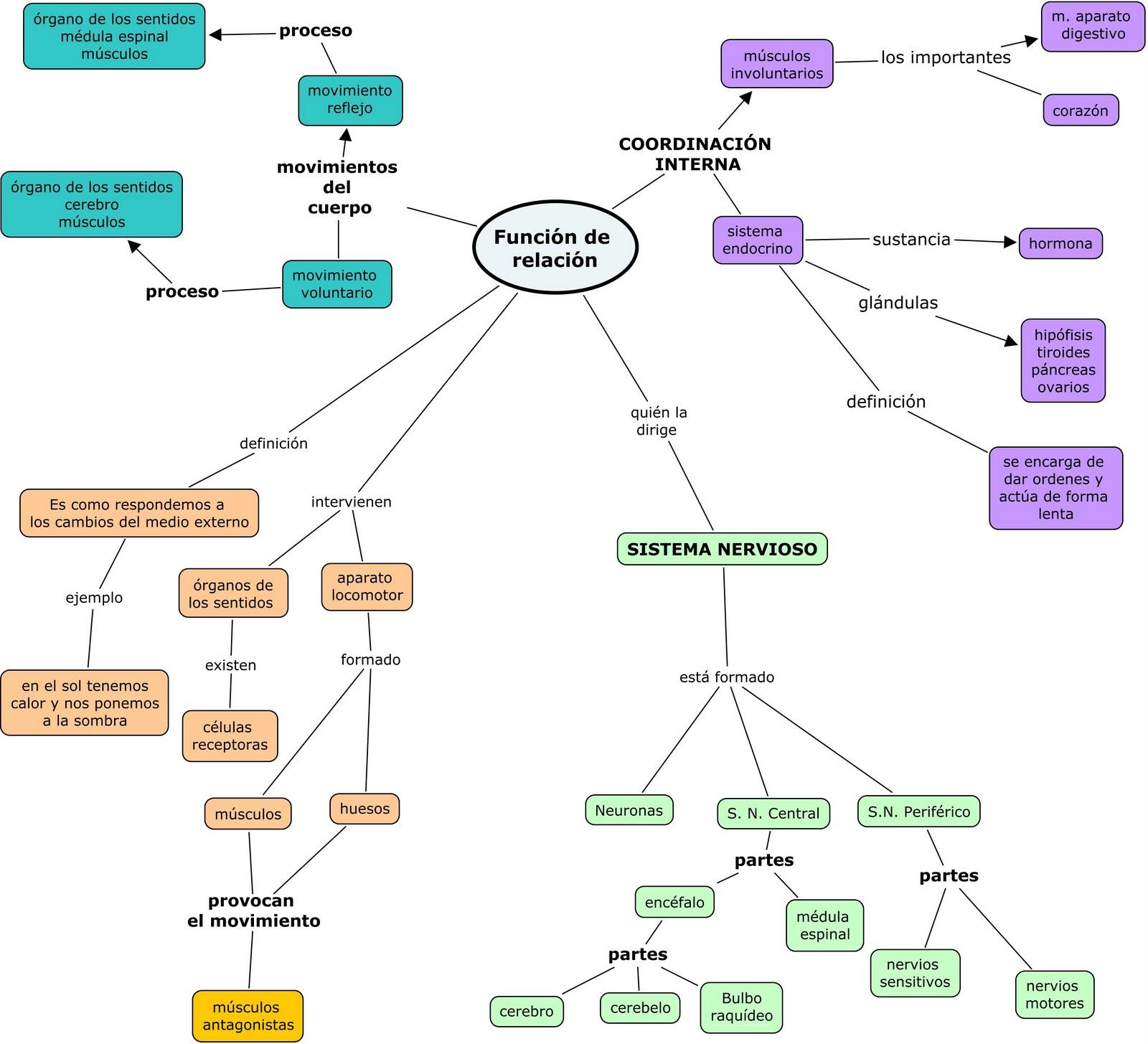 Encantador Diagrama De Sistemas Del Cuerpo Humano Colección de ...