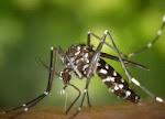 Αυξάνονται οι θάνατοι από τον ιό των κουνουπιών