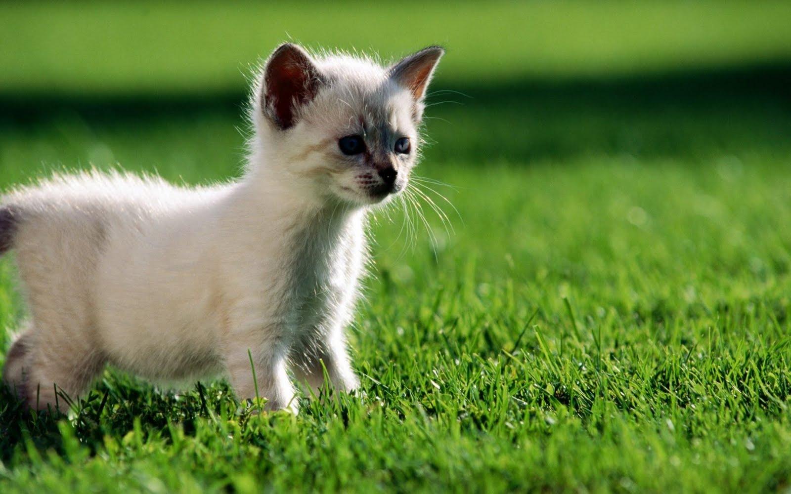 http://4.bp.blogspot.com/_3zkyrfijNIM/TFJbf-_0vNI/AAAAAAAAAYY/4Qd19XPdlQM/s1600/suspicious_cat.jpg